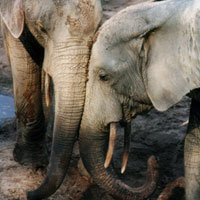 Whale Songs and Elephant Love   Science & Health   Sound ... - photo#21